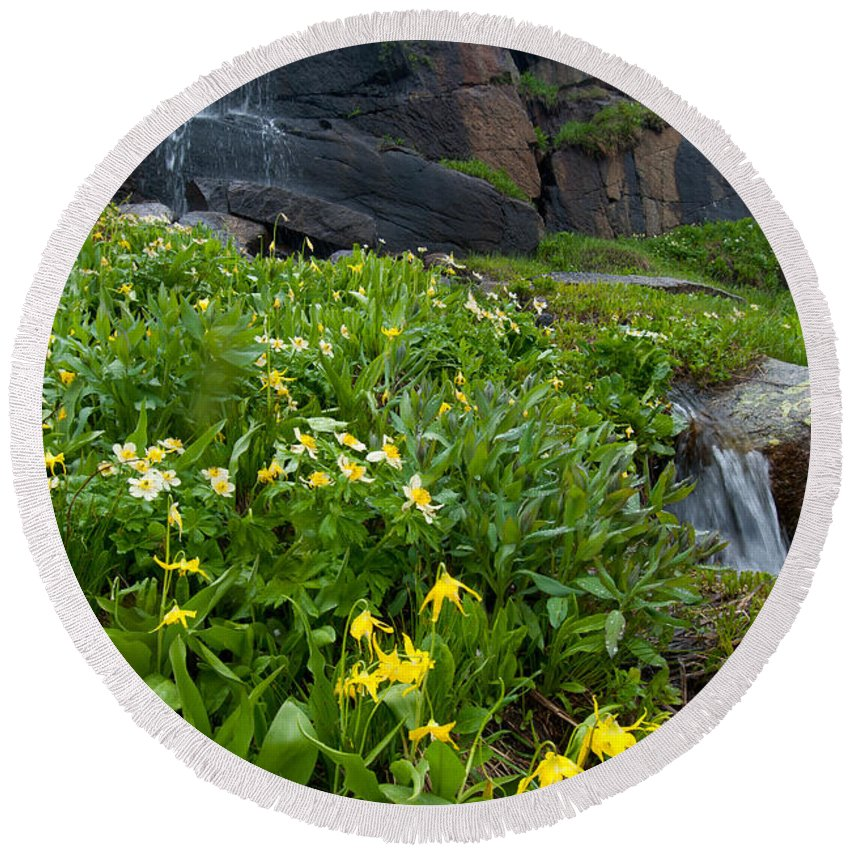Wildflower Round Beach Towel featuring the photograph Glacier Lilies And Globeflower Beside A Mountain Stream by Cascade Colors