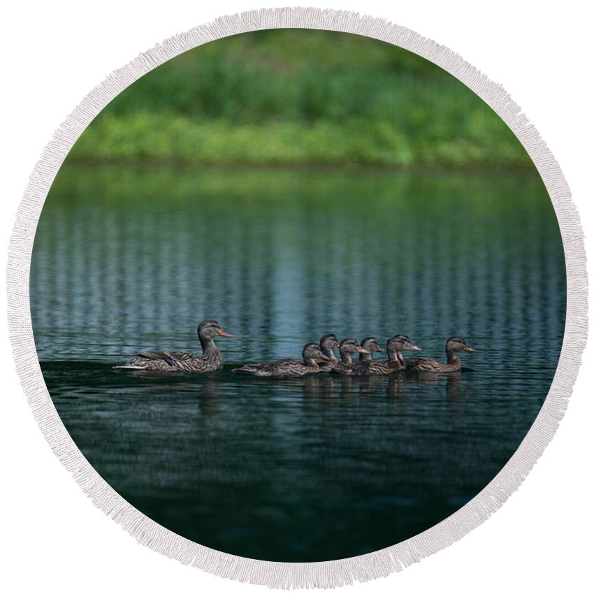 Ducks Round Beach Towel featuring the photograph Gliding Across The Water by Dale Powell