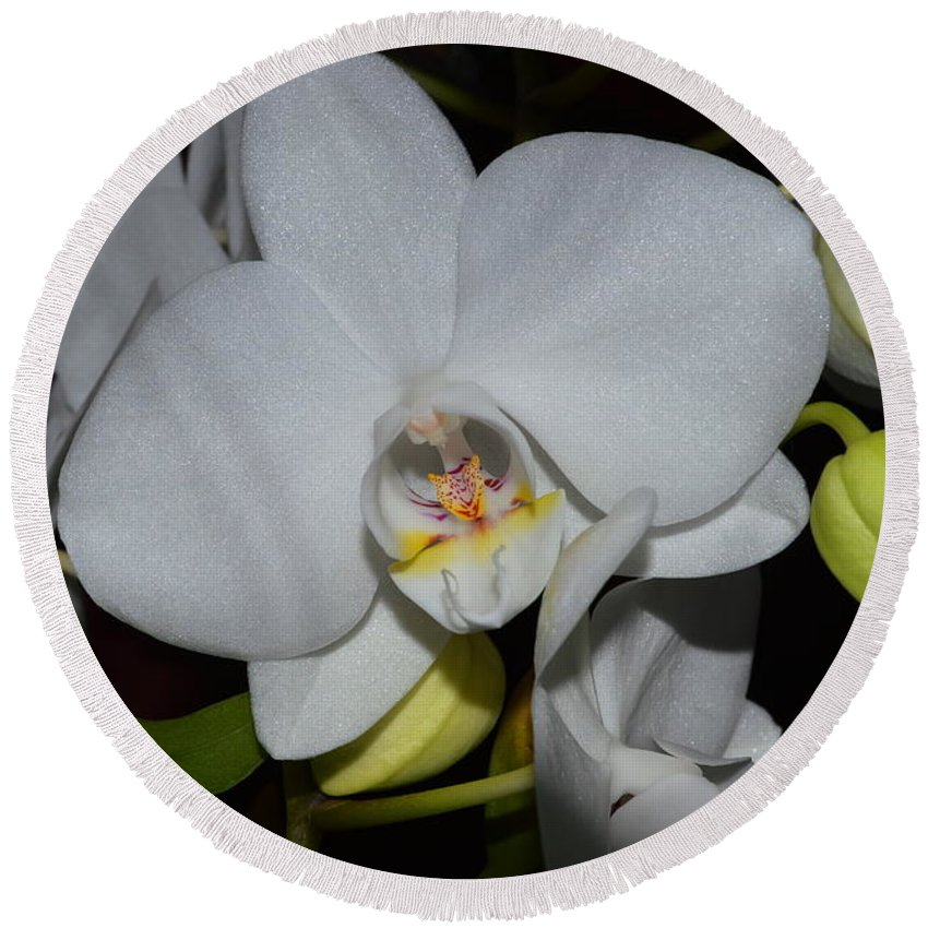 Orchids Round Beach Towel featuring the photograph Glistening White Pedals by Stacie Siemsen