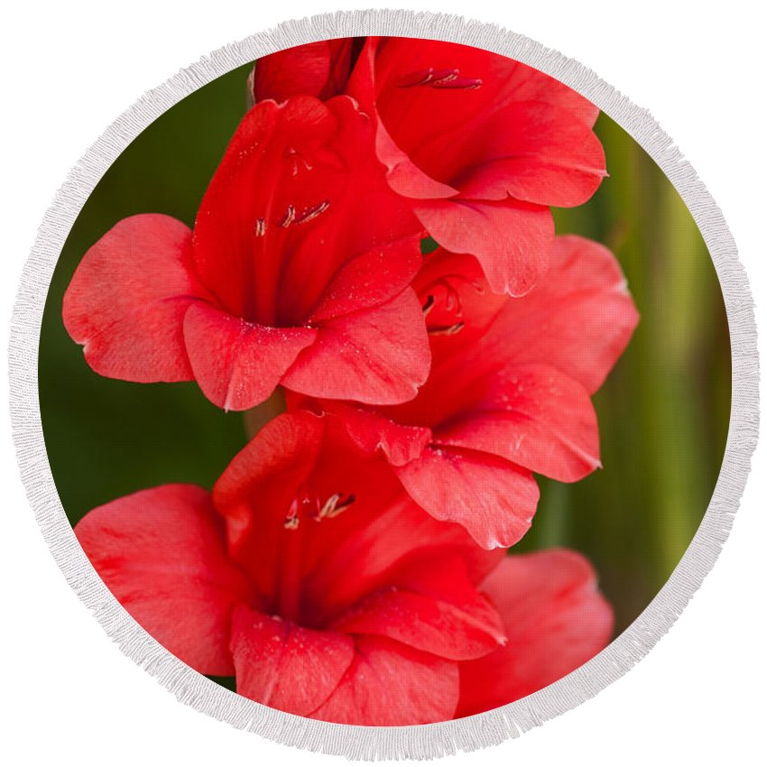 Flower Round Beach Towel featuring the photograph Glorious Glads by Lindley Johnson