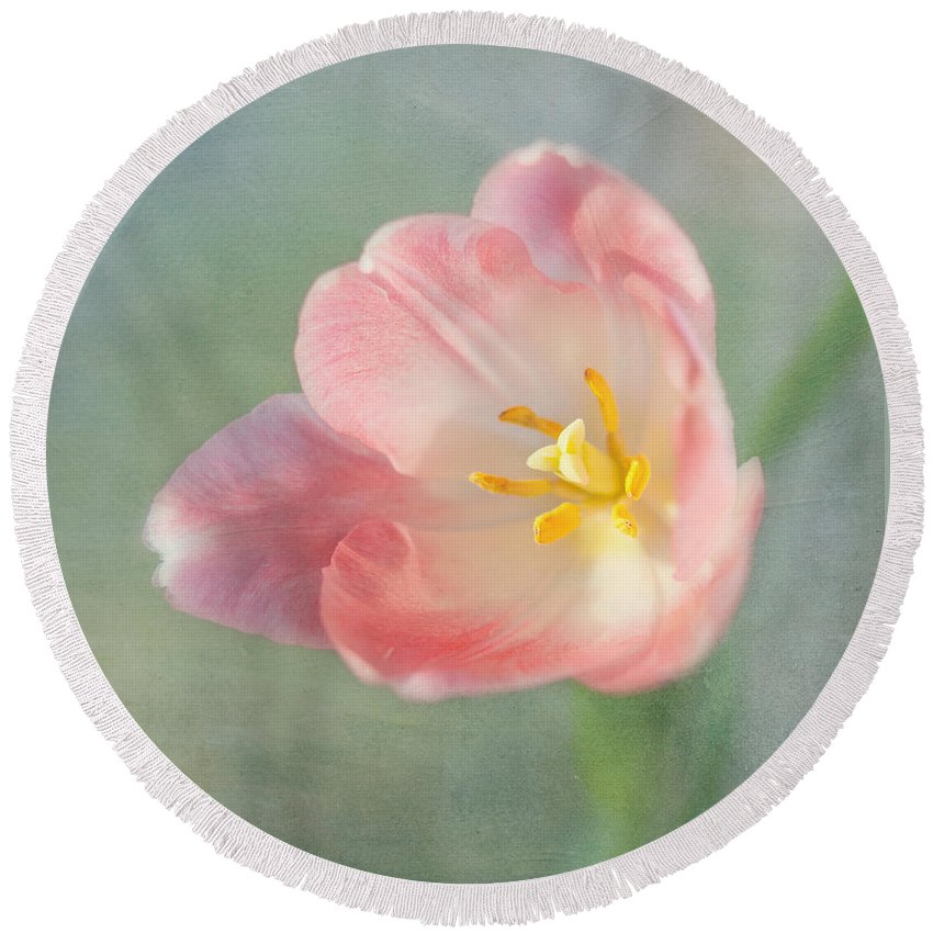 Pink Flower Round Beach Towel featuring the photograph Glow Within-pink Tulip by Kim Hojnacki