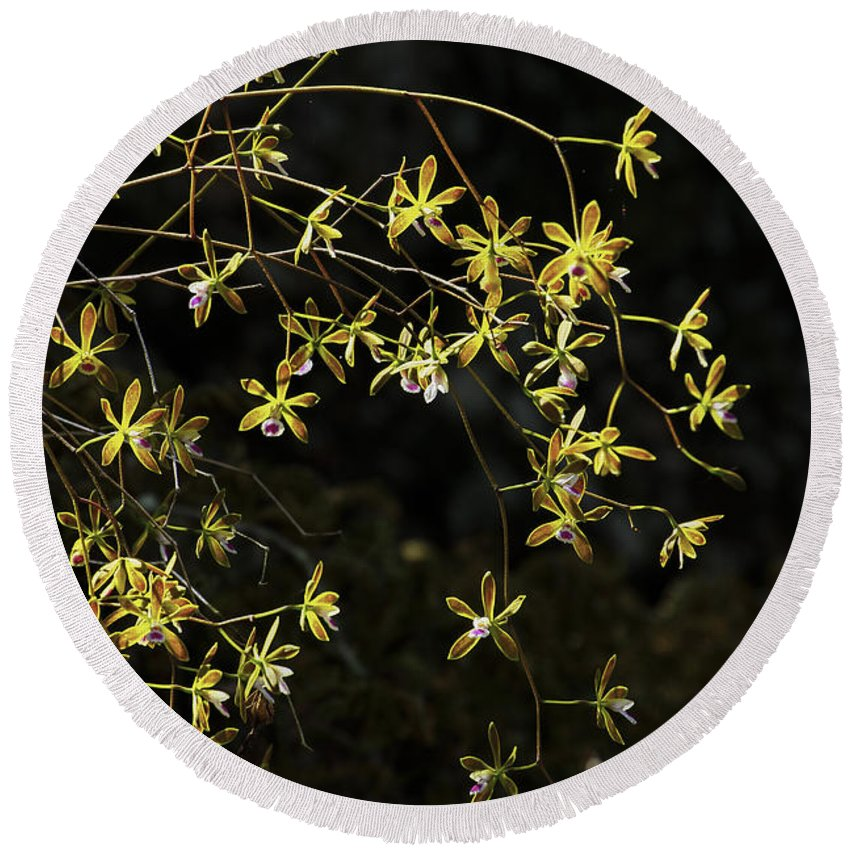 Butterfly Orchids Round Beach Towel featuring the photograph Glowing Orchids by Barbara Bowen