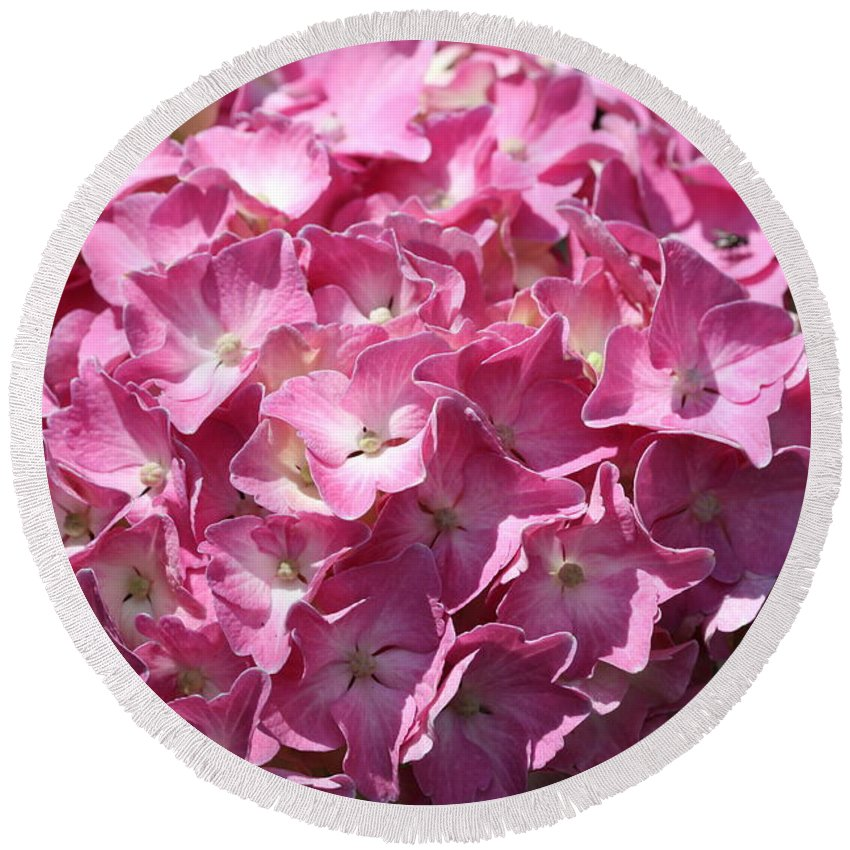 Hydrangea Round Beach Towel featuring the photograph Glowing Pink Hydrangea by Christiane Schulze Art And Photography