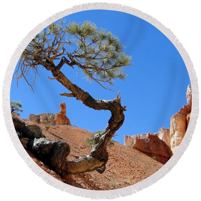 Pine Round Beach Towel featuring the photograph Gnarled Pine In Bryce Canyon Utah by Barbie Corbett-Newmin