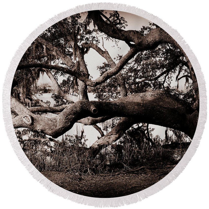 Gnarly Limbs At The Ashley River In Charleston Round Beach Towel featuring the photograph Gnarly Limbs At The Ashley River In Charleston by Susanne Van Hulst
