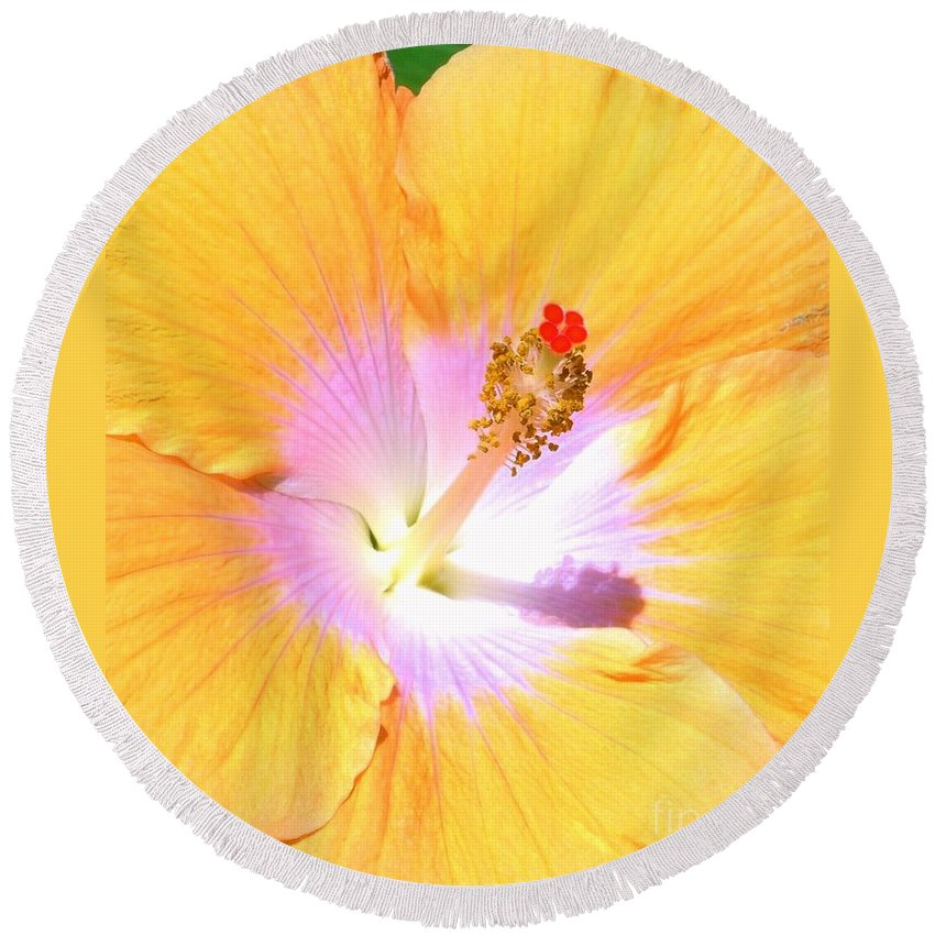 Gold Round Beach Towel featuring the photograph Gold Hibiscus by Mary Deal