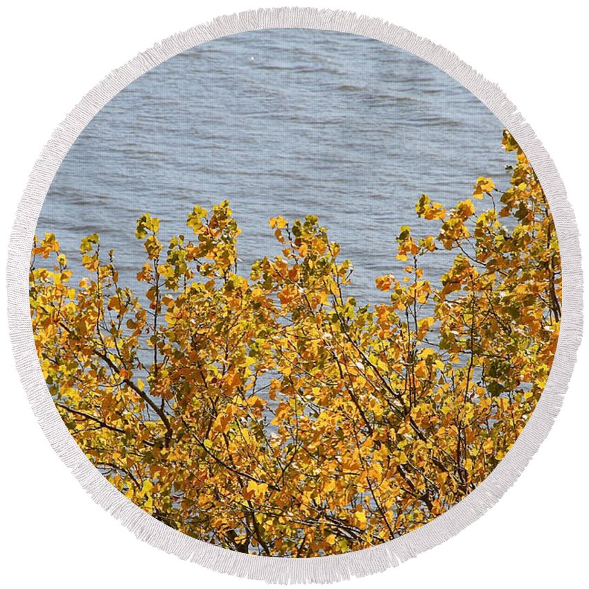 Flower Round Beach Towel featuring the photograph Gold Leaves by Susan Herber