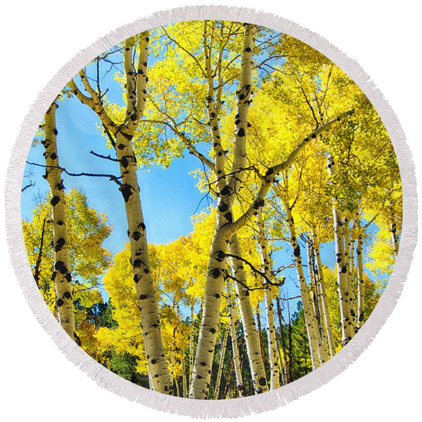 Fall Colors Round Beach Towel featuring the photograph Golden Aspens by Saija Lehtonen