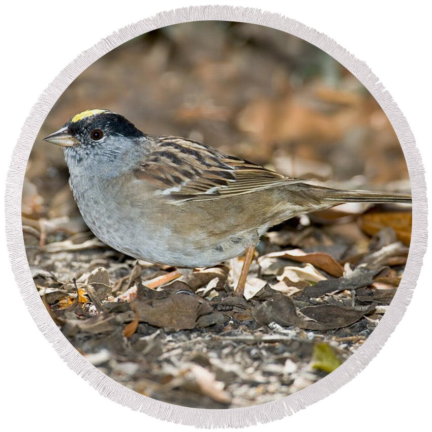 Fauna Round Beach Towel featuring the photograph Golden-crowned Sparrow by Anthony Mercieca