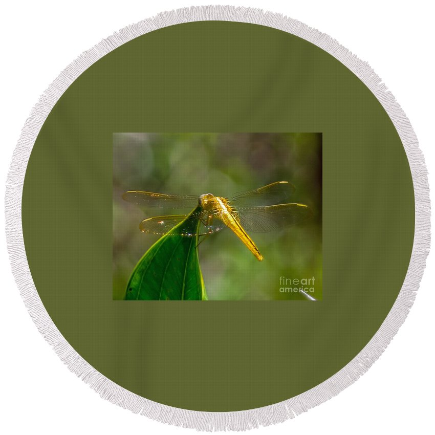 Golden Round Beach Towel featuring the photograph Golden Dragonfly by Stephen Whalen