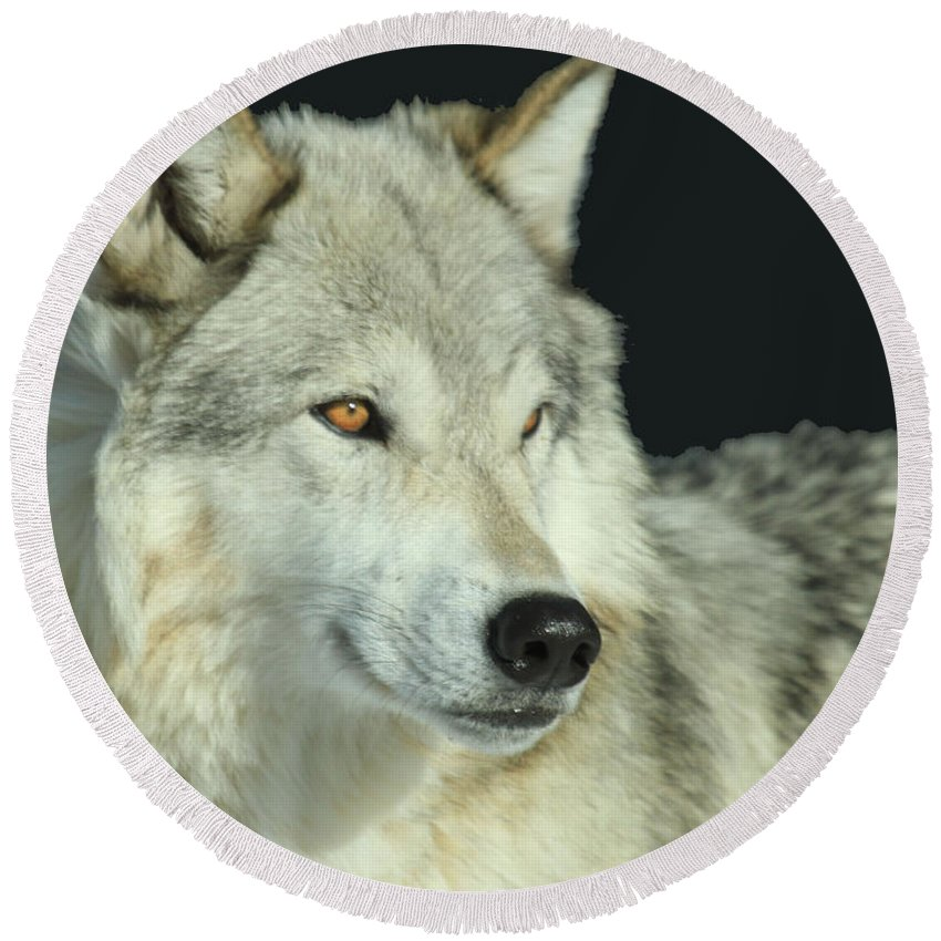 Gray Wolf Round Beach Towel featuring the photograph Golden Eye by Adam Jewell