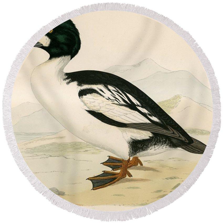Birds Round Beach Towel featuring the photograph Golden Eye by Beverley R. Morris