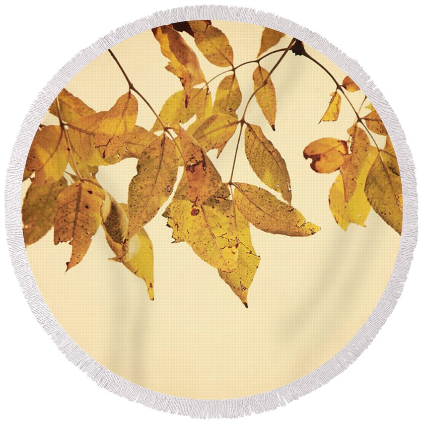 Tree Round Beach Towel featuring the photograph Golden Leaves by Pam Holdsworth