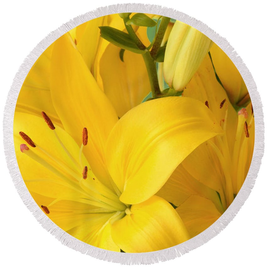 Yellow Lilies Round Beach Towel featuring the photograph Golden Lilies by Regina Geoghan