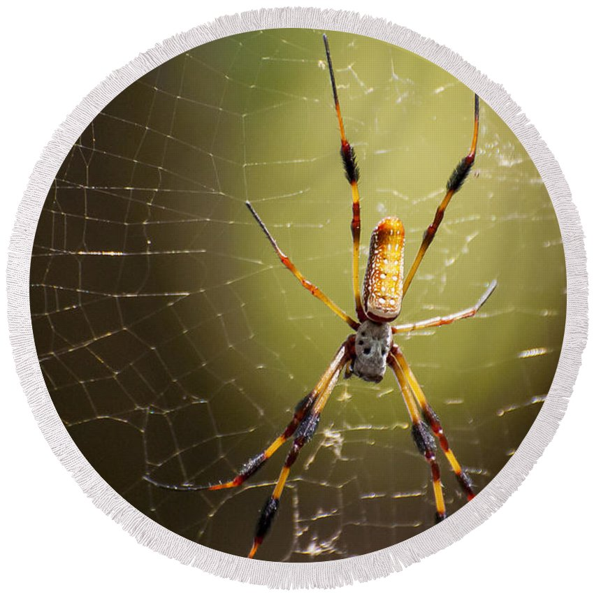 Golden Orb Weaver Spider Spiders Nature Creature Creatures Web Webs Nephila Clavipes Black Bayou Lake National Wildlife Refuge Monroe Louisiana Round Beach Towel featuring the photograph Golden Orb Weaver by Bob Phillips
