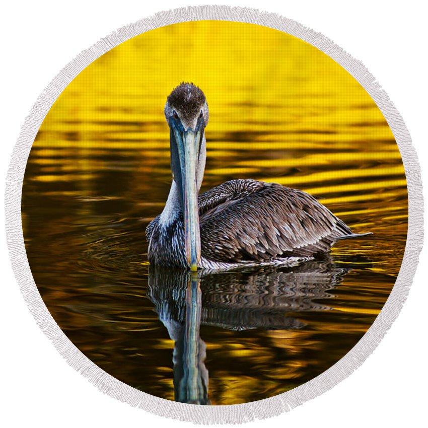 Brown Pelican Round Beach Towel featuring the photograph Golden Reflections by Joan McCool