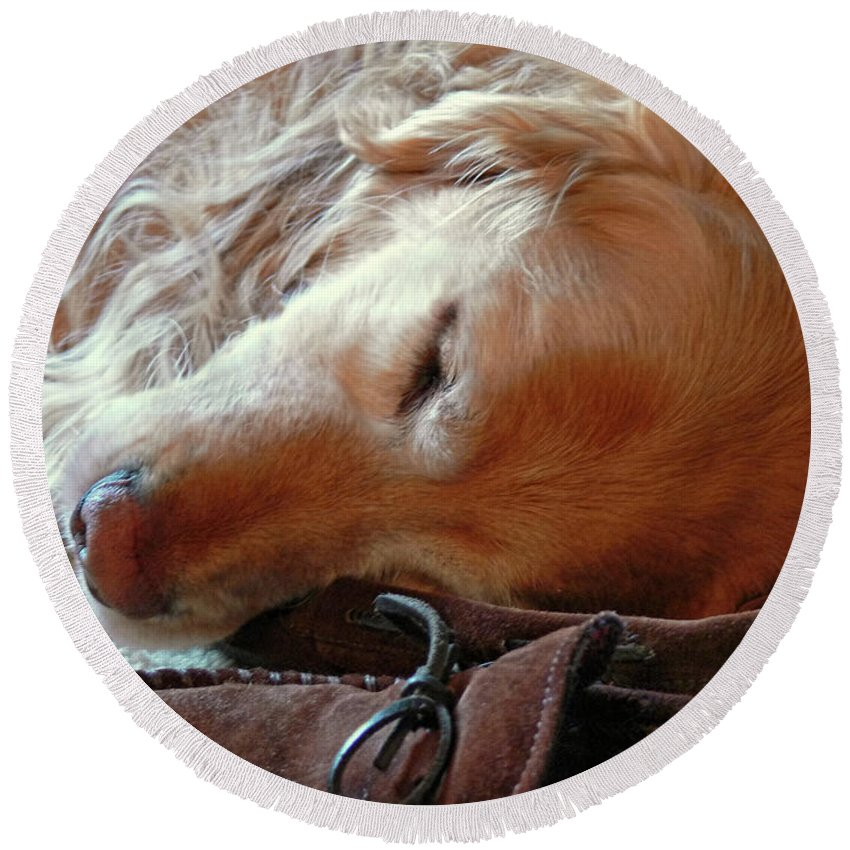Golden Retriever Round Beach Towel featuring the photograph Golden Retriever Sleeping With Dad's Slippers by Jennie Marie Schell