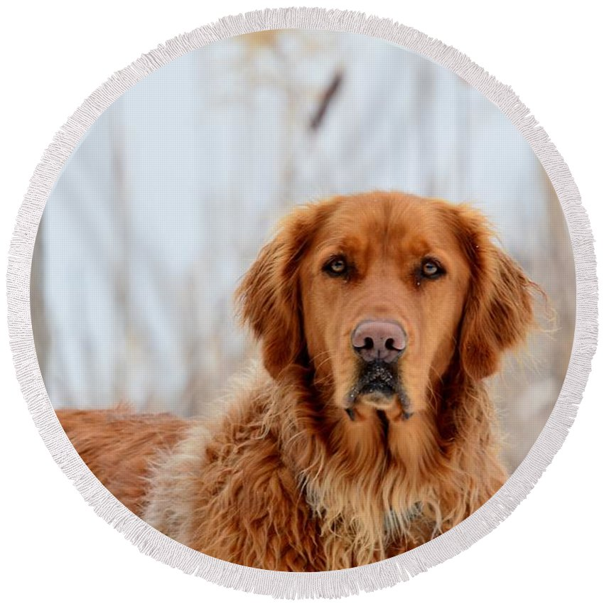 Golden Retriever Round Beach Towel featuring the photograph Golden Thoughts by Thomas Phillips