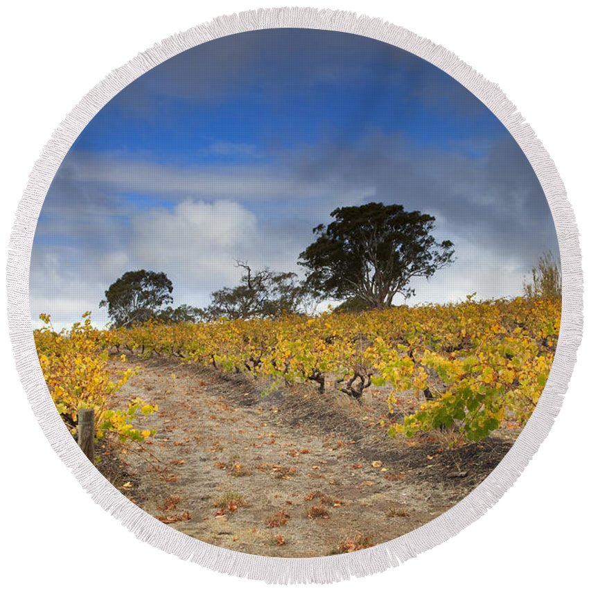 Golden Round Beach Towel featuring the photograph Golden Vines by Mike Dawson
