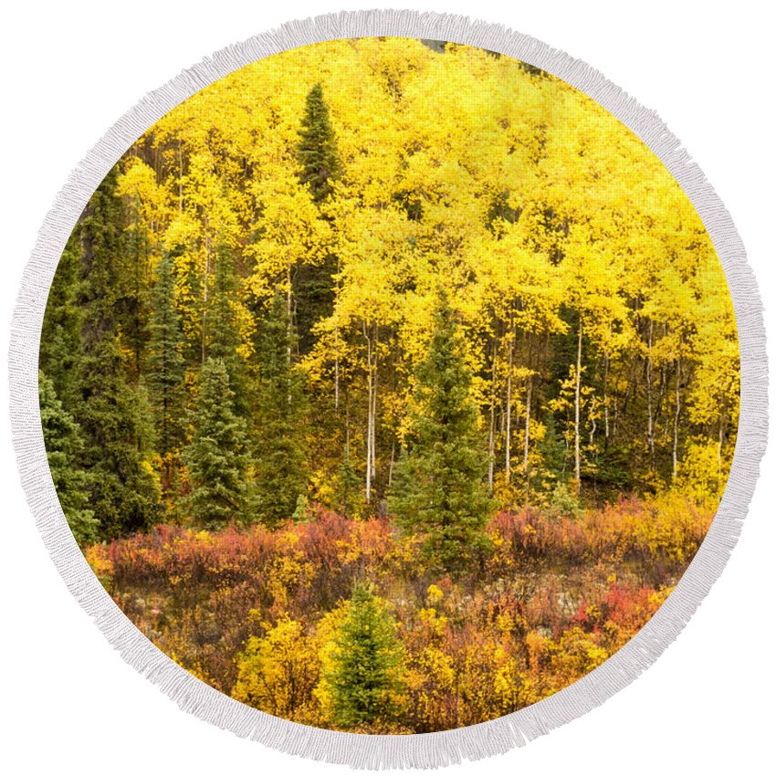Aspen Round Beach Towel featuring the photograph Golden Yellow Fall Boreal Forest In Yukon Canada by Stephan Pietzko