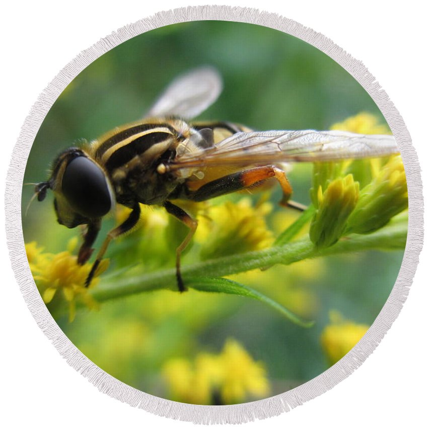 Hoverfly Round Beach Towel featuring the photograph Good Guy Hoverfly by Martin Howard