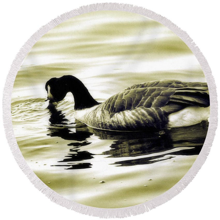Goose Round Beach Towel featuring the photograph Goose Reflecting In The Water by Alice Gipson