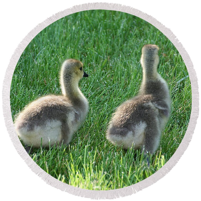 Outdoors Round Beach Towel featuring the photograph Goslings by Susan Herber