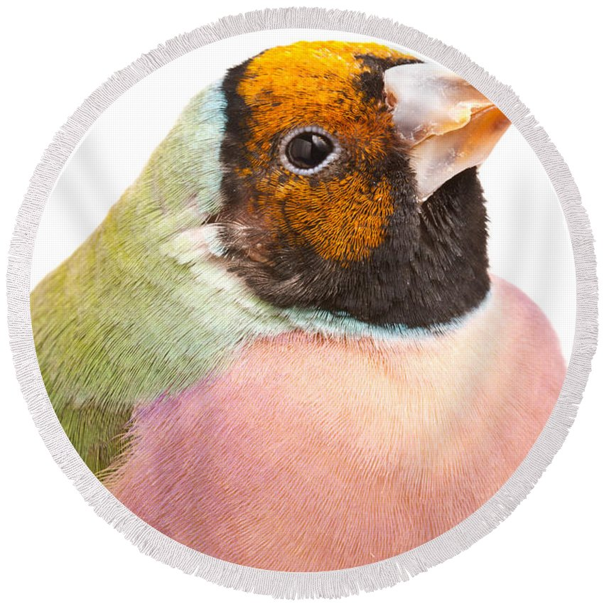 Animal Round Beach Towel featuring the photograph Gouldian Finch Erythrura Gouldiae by David Kenny