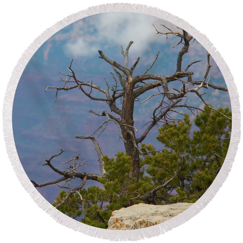 Grand Canyon Round Beach Towel featuring the photograph Grand Canyon Tree by Rod Wiens