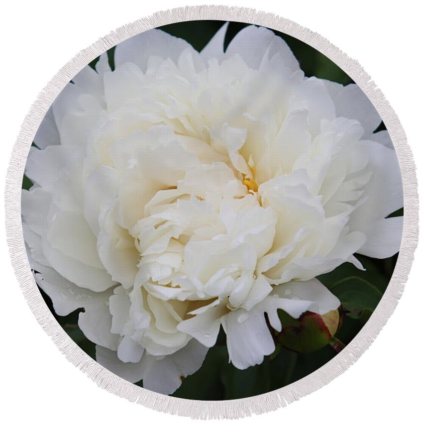 White Flower Round Beach Towel featuring the photograph Grandma's Peony by Elizabeth Winter