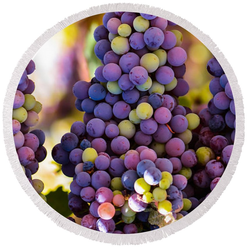 Grape Round Beach Towel featuring the photograph Grape Bunches Wide by Michael Moriarty