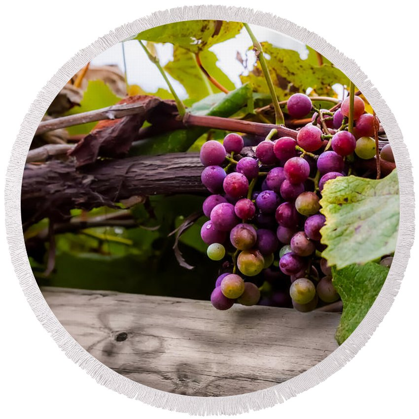 Grape Round Beach Towel featuring the photograph Grapes On The Vine by Ron Pate