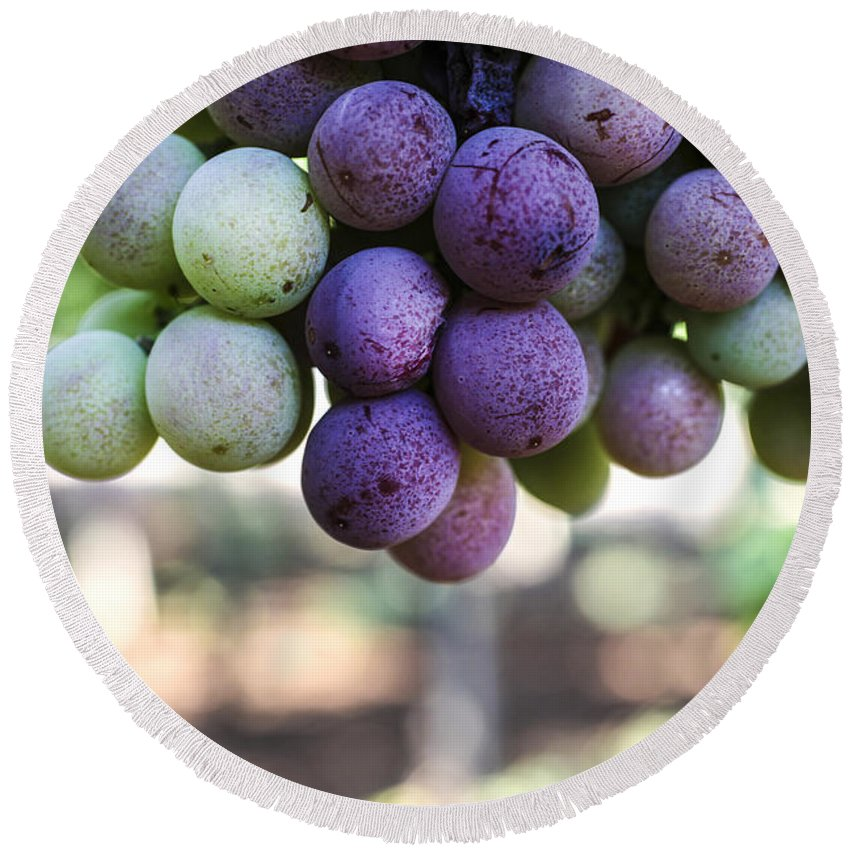 Ripeness Round Beach Towel featuring the photograph Grapes On Vine by Gal Eitan