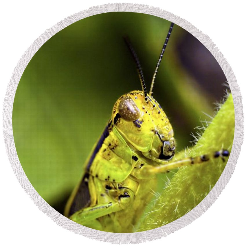 Grasshopper Round Beach Towel featuring the photograph Grasshopper Macro 9402 by Bonfire Photography