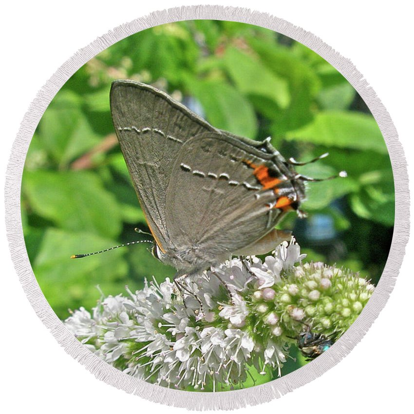 Butterfly Round Beach Towel featuring the photograph Gray Hairstreak Butterfly - Strymon Melinus by Mother Nature