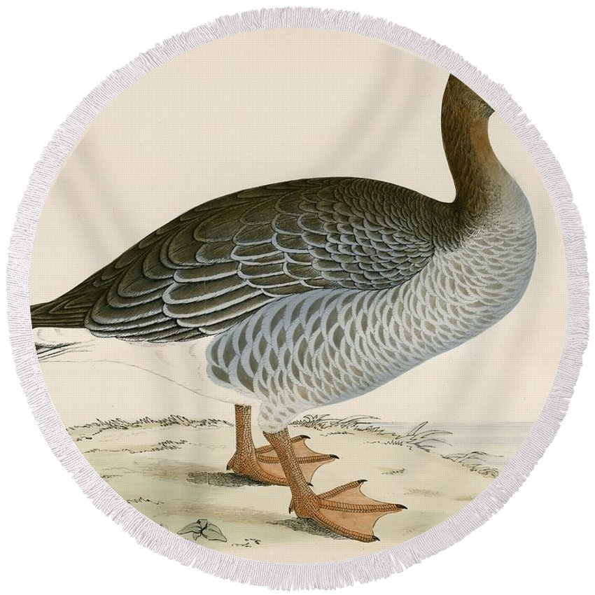 Birds Round Beach Towel featuring the photograph Gray Lag Goose by Beverley R. Morris