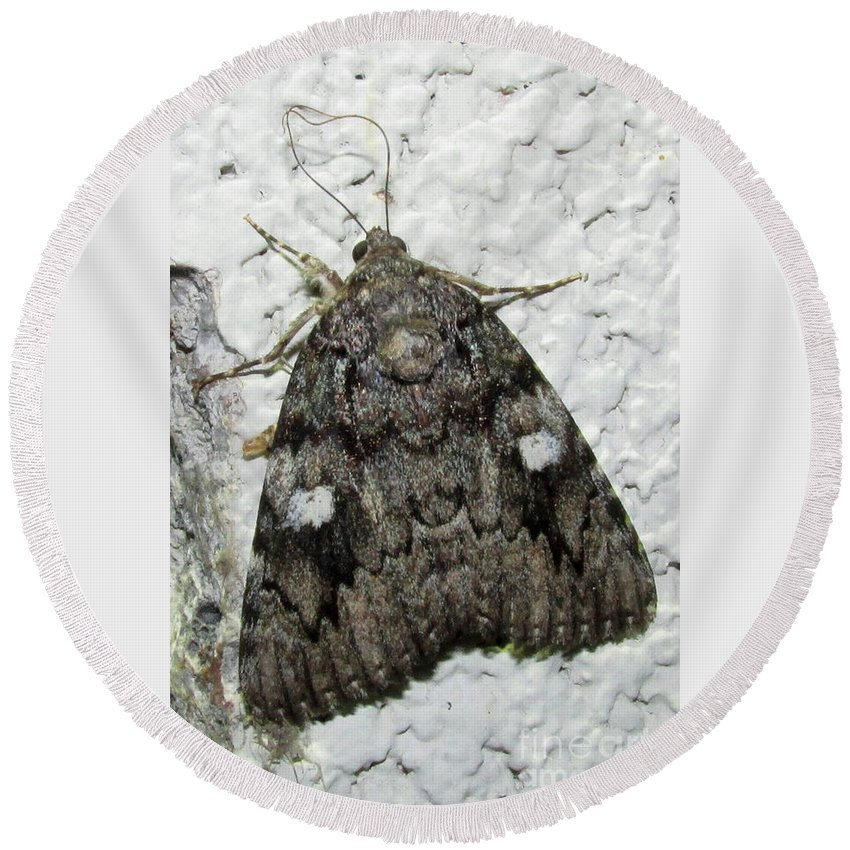 Gray Owlet Moth Gray Moths Of North America Gray Moths Of Pennsylvania Gray Moths Of Maryland Rare Moth Species Moths With Eye Spots Round Beach Towel featuring the photograph Gray Owlet Moth by Joshua Bales
