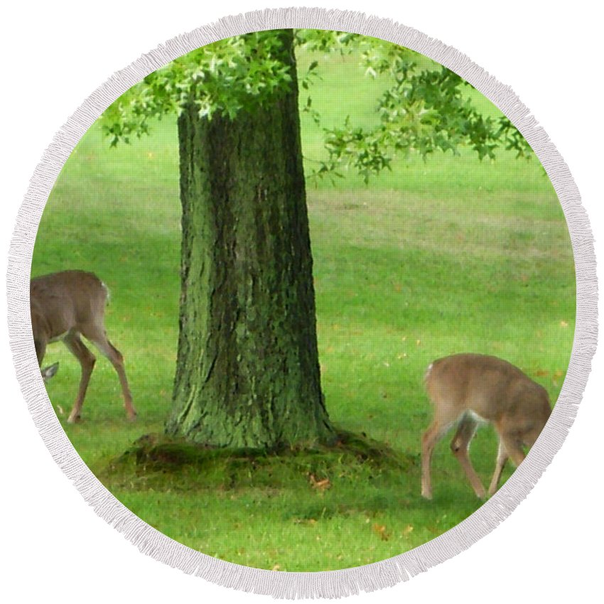 Deer Round Beach Towel featuring the photograph Grazing by Aimee L Maher ALM GALLERY