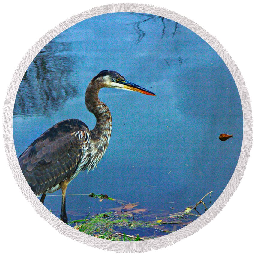 Great Blue Heron Round Beach Towel featuring the photograph Great Blue Along The Canal by Gary Richards