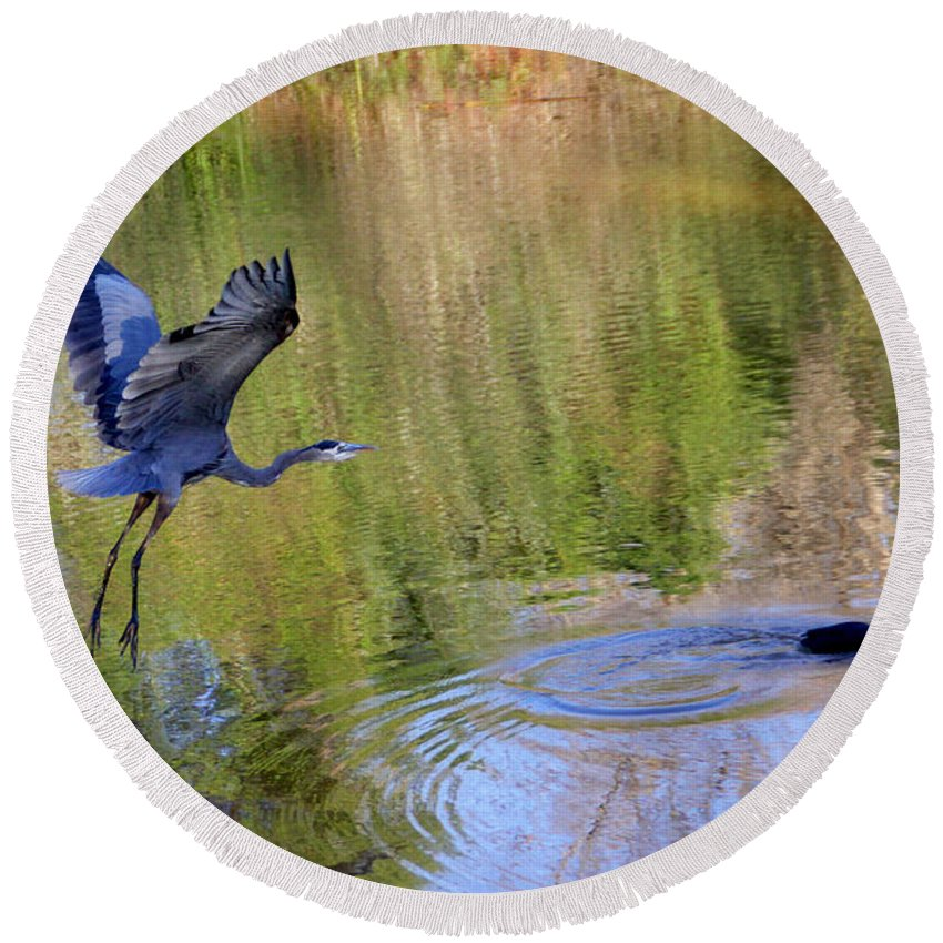 Great Blue Heron Round Beach Towel featuring the photograph Great Blue Heron And Coot by Diana Haronis
