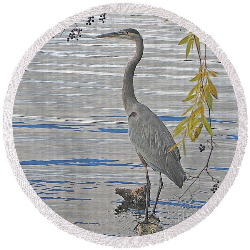 Heron Round Beach Towel featuring the photograph Great Blue Heron by Ann Horn