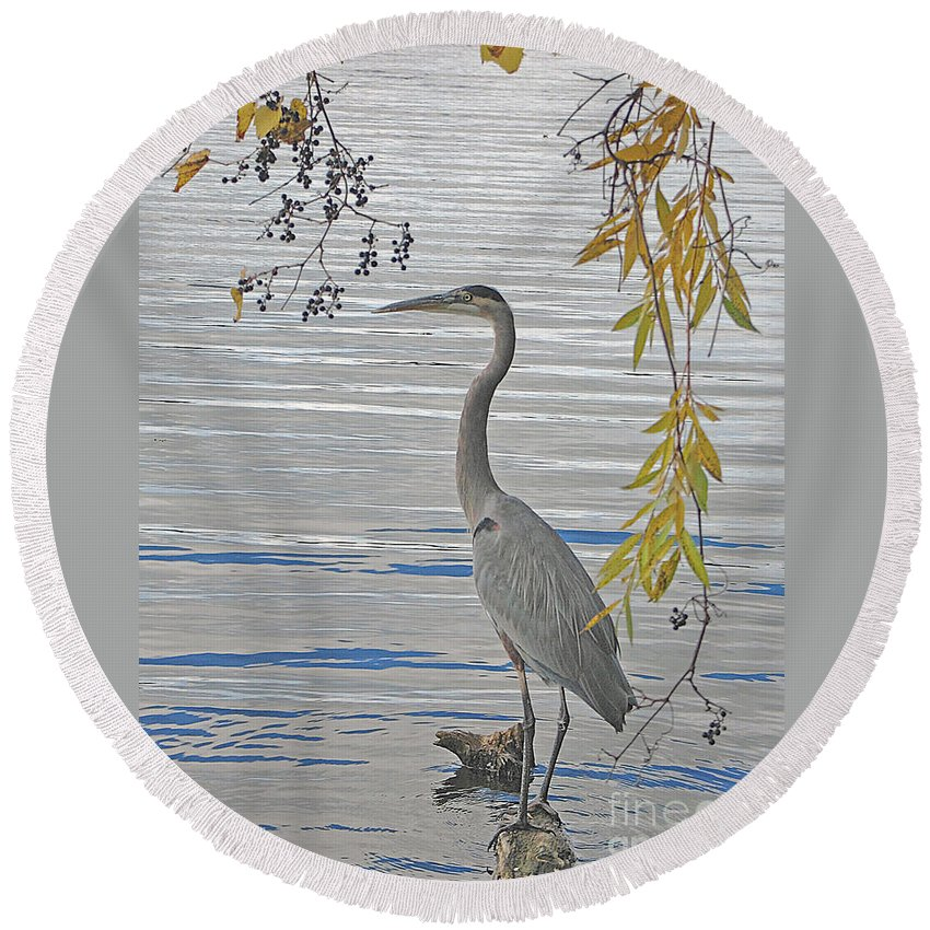 Heron Round Beach Towel featuring the photograph Great Blue Heron by Ann Horn