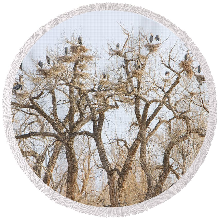 Blue Heron Round Beach Towel featuring the photograph Great Blue Heron Hangout by James BO Insogna