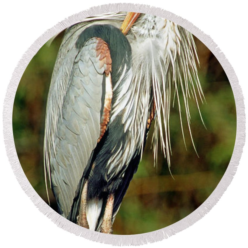 Animal Round Beach Towel featuring the photograph Great Blue Heron by Millard H. Sharp