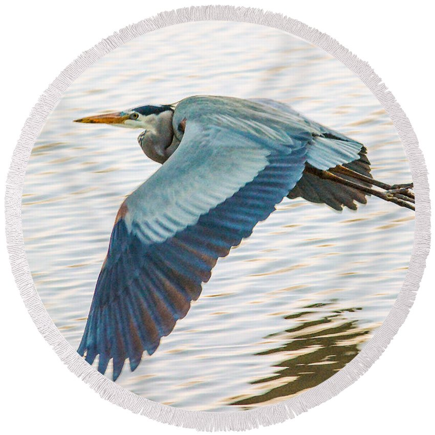 Great Blue Heron Round Beach Towel featuring the photograph Great Blue Heron Taking Flight by Brian Tada