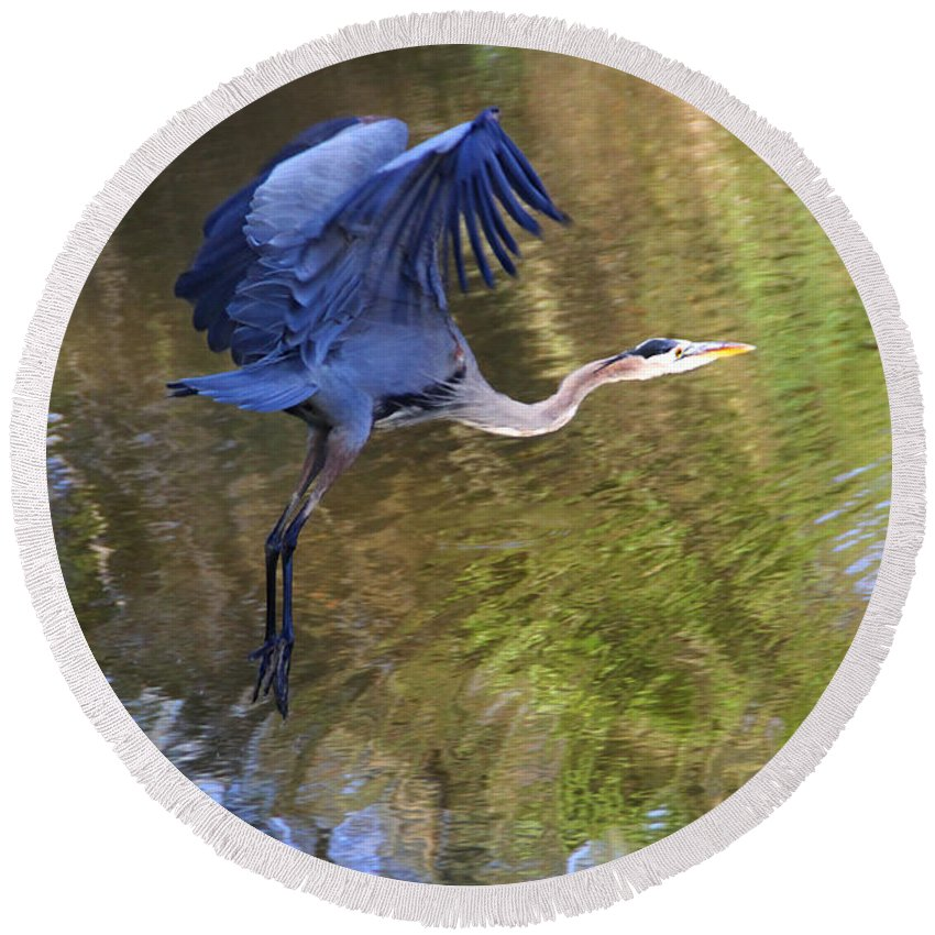 Great Blue Heron Round Beach Towel featuring the photograph Great Blue Heron Taking Off by Diana Haronis