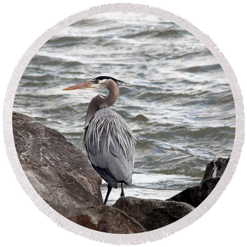 Great Blue Heron Round Beach Towel featuring the photograph Great Blue Heron by Trina Ansel