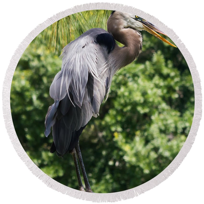 susan Molnar Round Beach Towel featuring the photograph Great Blue Heron Vii by Susan Molnar