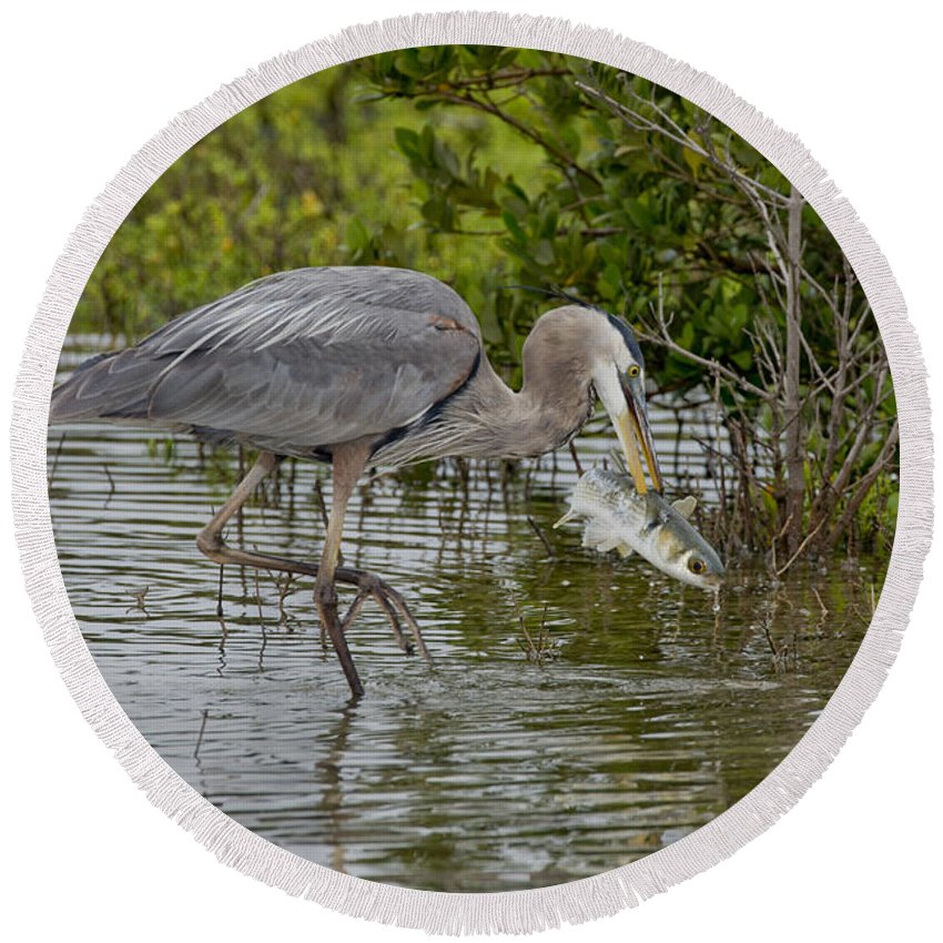 Great Blue Heron Round Beach Towel featuring the photograph Great Blue Heron With Fish by Anthony Mercieca