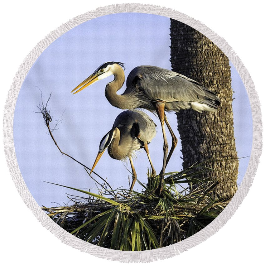 Birds Round Beach Towel featuring the photograph Great Blue Herons Nesting by Fran Gallogly